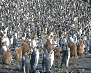 penguinたち