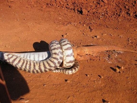 snake_07