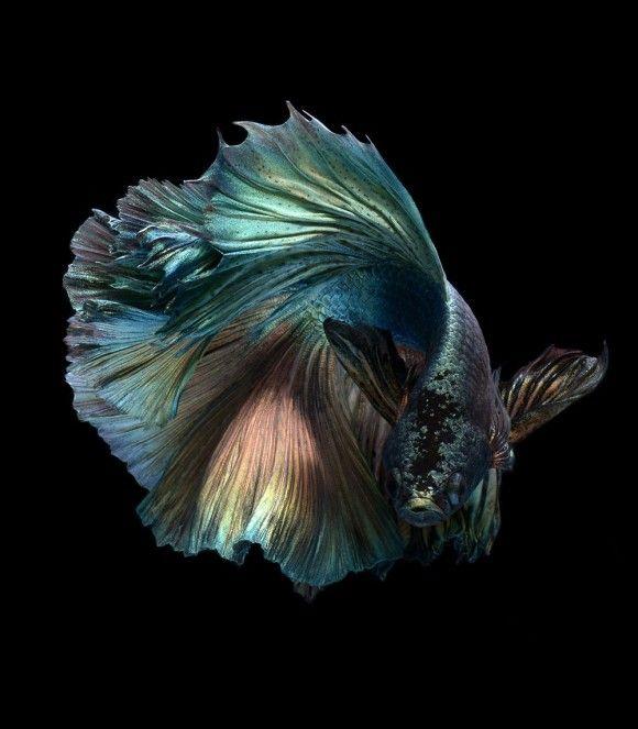 fish-6_e