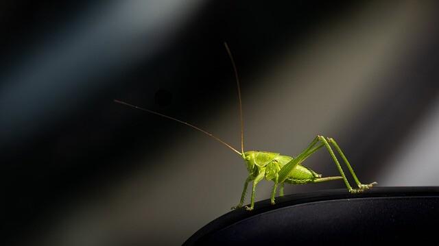 grasshopper-6263239_640