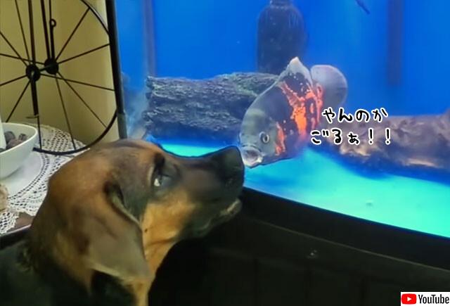 魚と犬がガチンコ対決