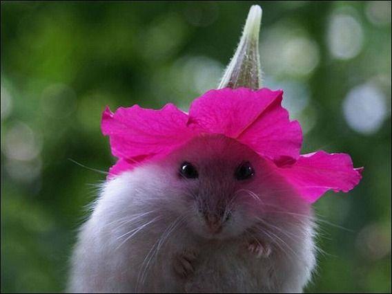 hamsters_16