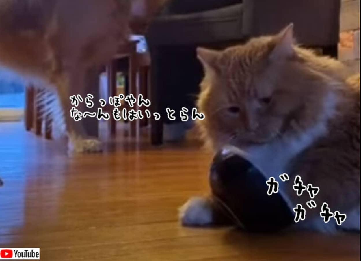 猫流餌の催促の方法