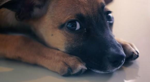 ペット ショップ の 売れ残り の 犬 を 買い たい