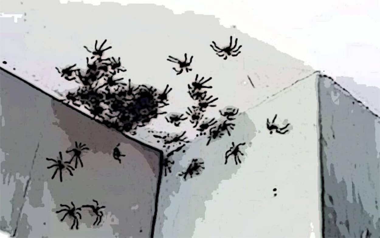 娘の部屋の天井にアシダカグモが密集中