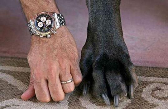 Worlds_Tallest_Dog_13