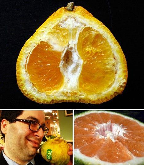 amazing_fruits_7x