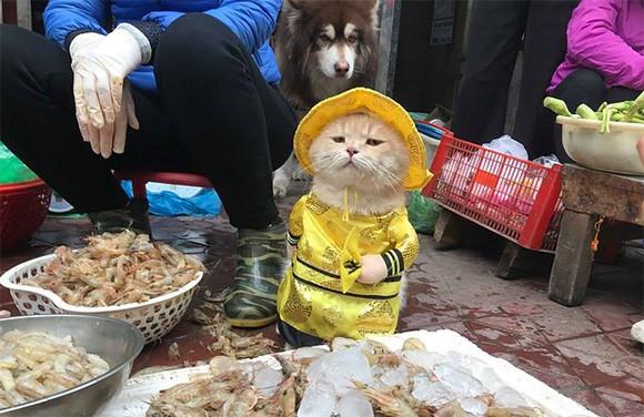 ベトナムでは、犬という名の猫が魚屋での看板店員をつとめているらしい。