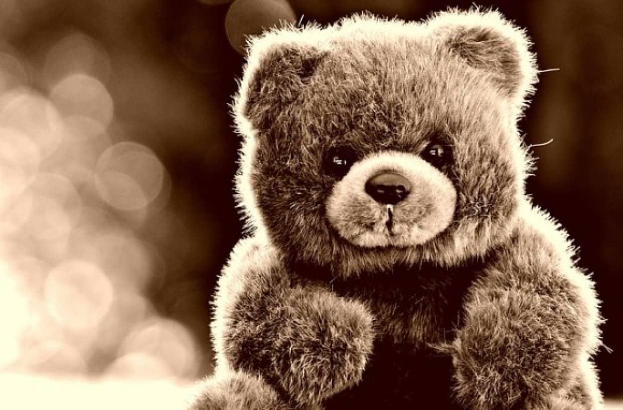 bear cover_e