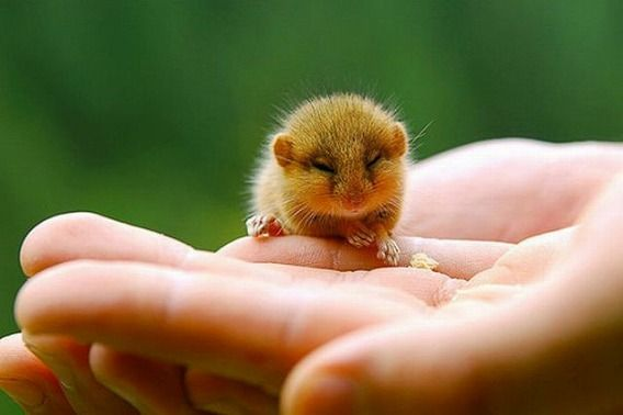 the_smallest_pets_640_10