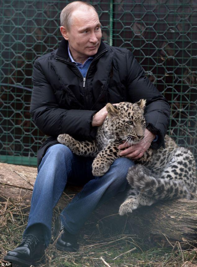 興奮したユキヒョウもおとなしくなるプーチン大統領