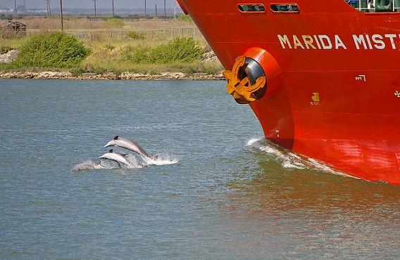 synchronized swimming animals 6