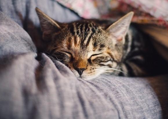 「猫は飼い主を自ら選んでいる」は本当だったかも!?保護された猫に関する13のちょっといい話