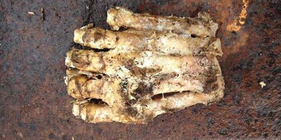 今度こそ?今度こそか?森の中で発見された巨大な謎の足(米マサチューセッツ州)