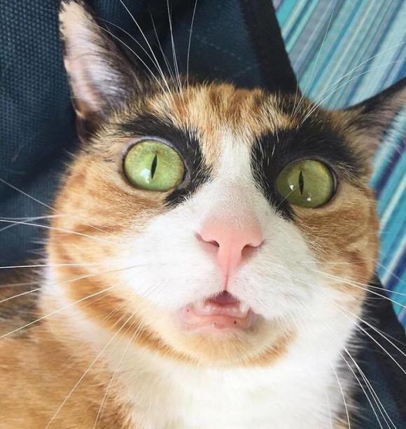 なんか強そうだぞ!真っ黒極太アイラインが魅力の三毛猫のリリー(メス)