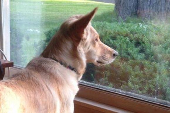 窓際で芽生えた小さな恋の物語。愛犬が向かいの家に住む猫に恋をした。