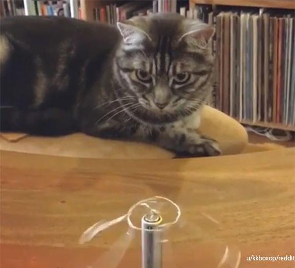 ふむふむ、電池に針金を置くと回転するとな。猫が右手の法則の仕組みを学んでいる様子