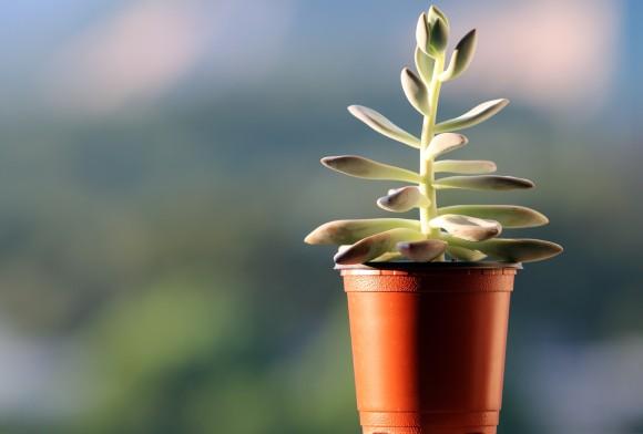 観葉植物を育てるのに役立つコーヒーフィルター