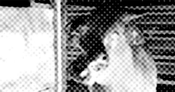 オーストラリアで2つのねじれた顔を持つ牛が競売にかけられ、5万円で落札される(閲覧注意)