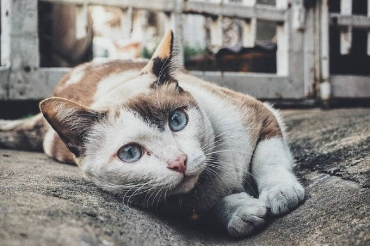 cat-1209067_640_e