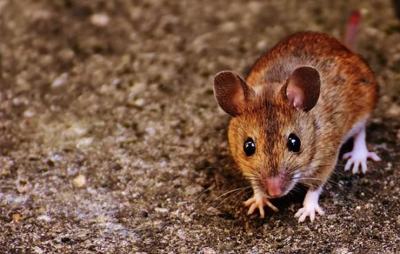 犯人は猫!買い物客のバッグからネズミが出現、スーパーが閉店騒ぎになる事態に(イギリス)
