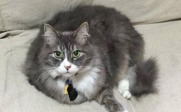 オフィス猫として勤務していた盲目の猫、会社が倒産し失業するも最高の飼い主が見つかる(アメリカ)