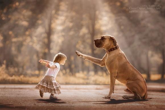 待ったをかける犬と赤ちゃん