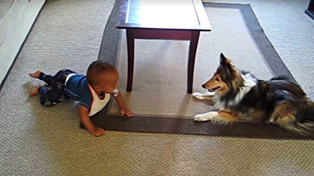 楽しいね!楽しいね!犬のベビーシッターと大喜びで遊ぶ赤ちゃんの笑い声がはじける動画