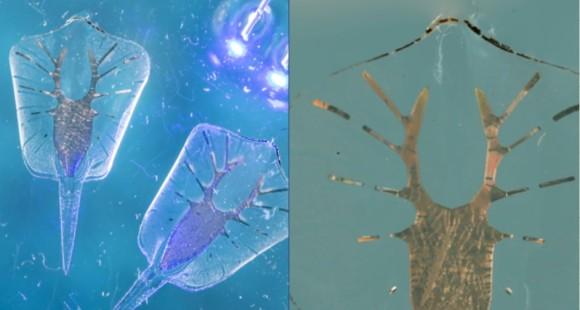 生物+ロボットで誕生した人造クリーチャー、光に反応する筋細胞で動き回るエイ型ロボット(米研究)