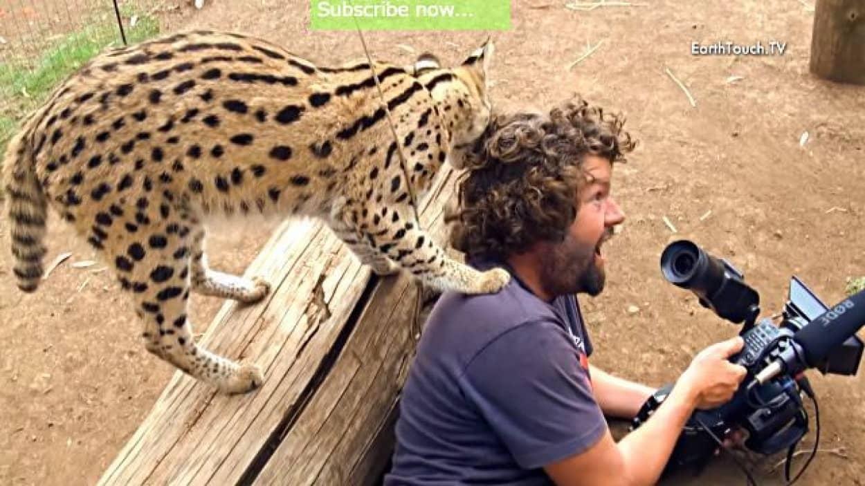 wildcatcameraman0