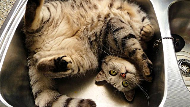 居心地よすぎて困っちゃう。猫と洗面台のナイスマッチな写真集