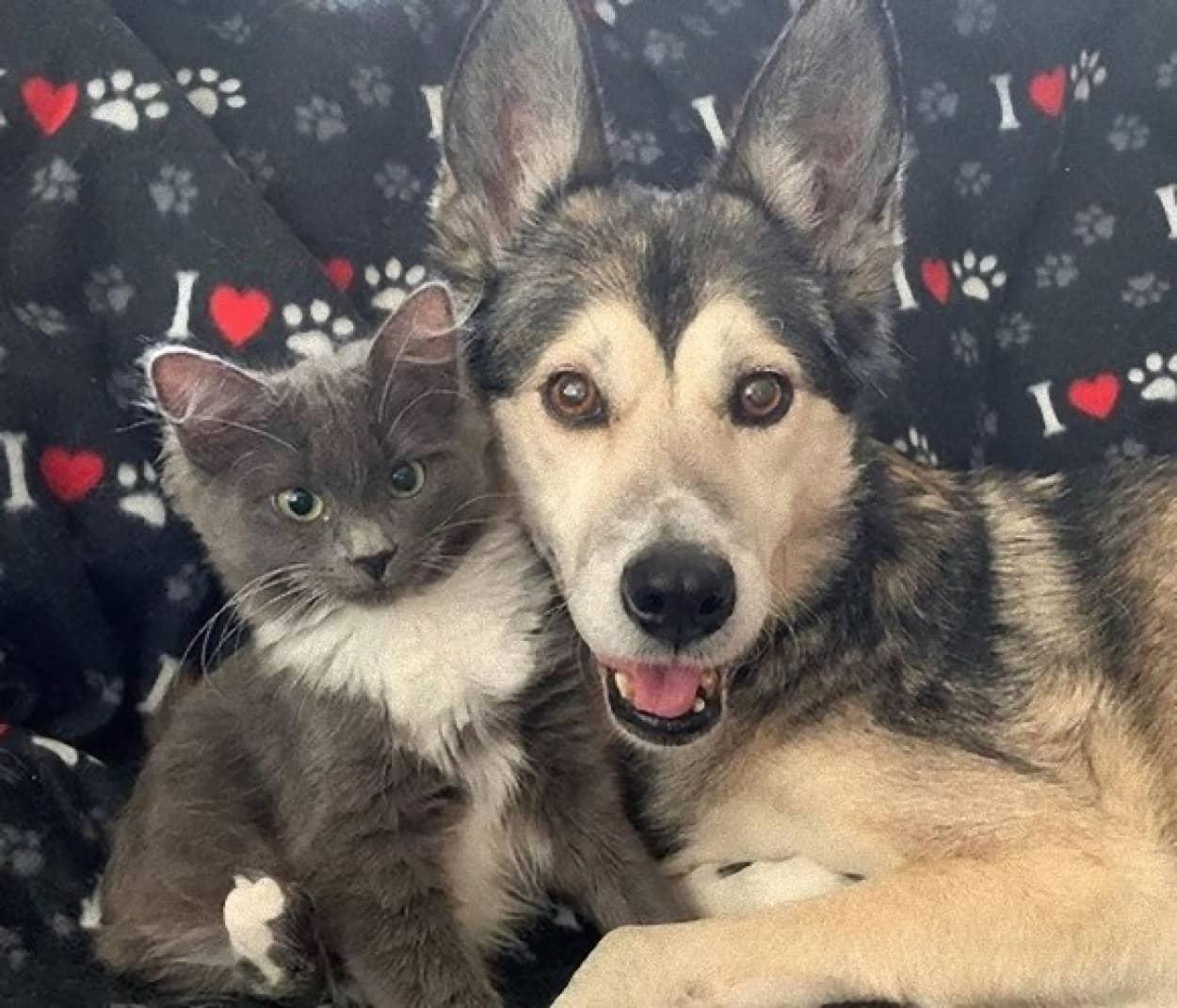 猫の母親代わりは犬