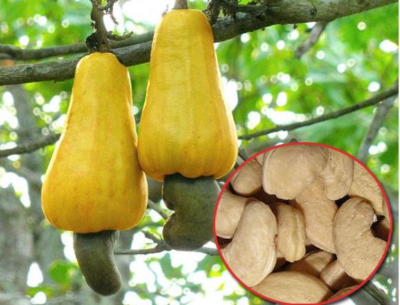 あのフルーツやナッツ類。あらやだびっくり、収穫前はこんな姿だった。