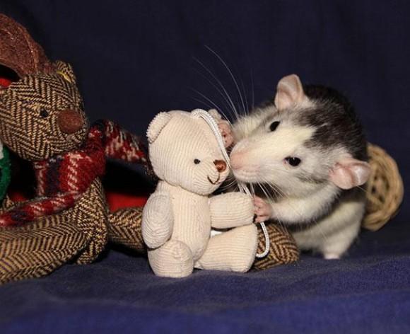 rats-with-teddy-bears-5_e