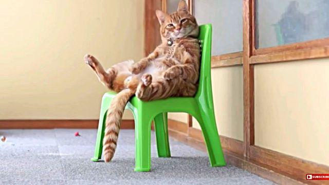 sittingcat3