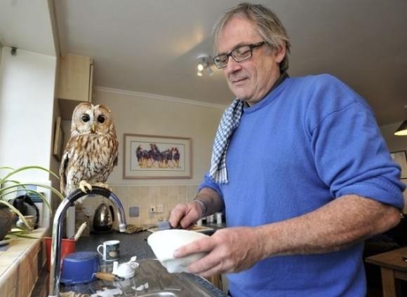 フクロウの子どもを助けたら、すっかり家になじんで引きこもりに。家のお手伝いが大好きな家政鳥となる(イギリス)
