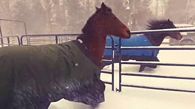 horseregret0