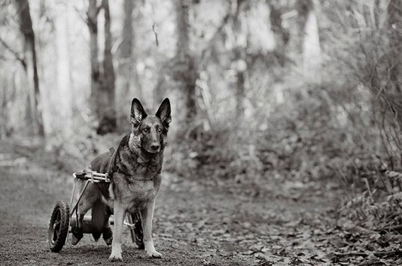 old_dogs_05