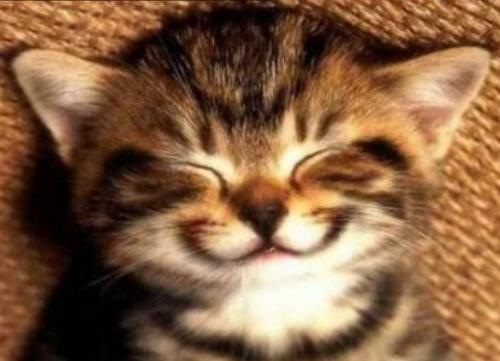 笑う動物画像』っていっぱいある...