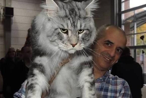 大きくなる猫