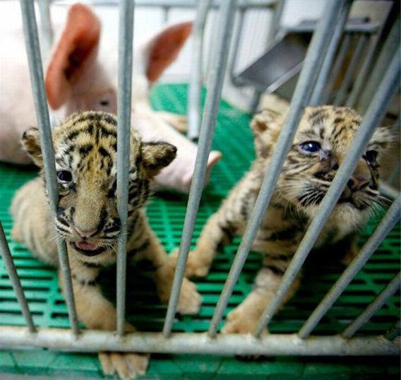 animal_adoptions_11