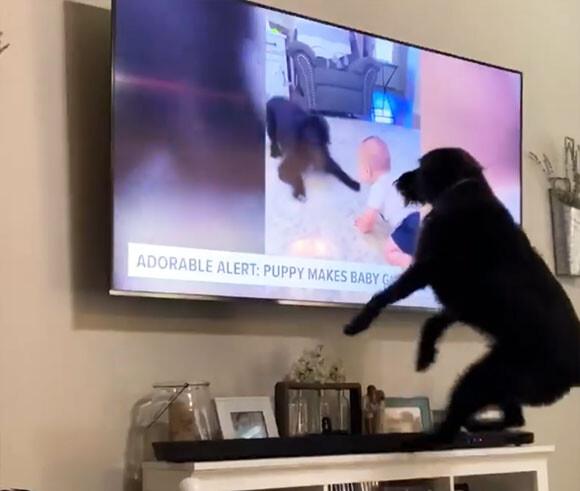 テレビに映る自分に大喜びの犬