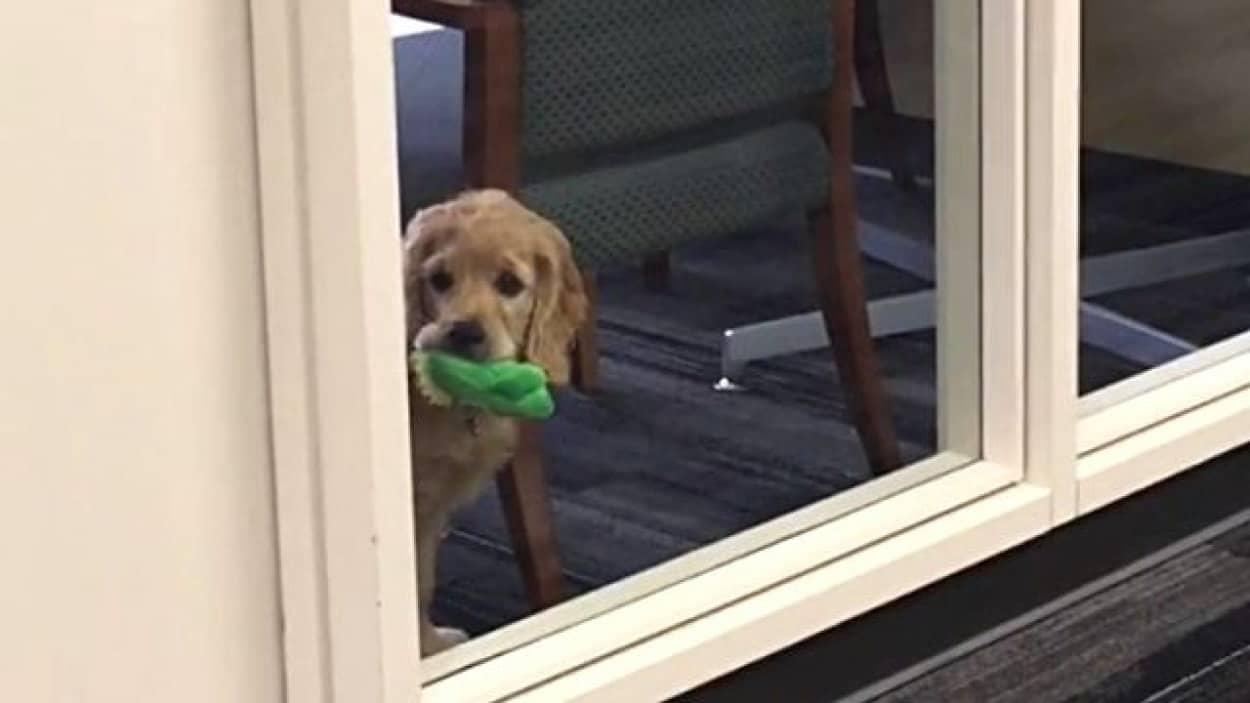 officedog1_e