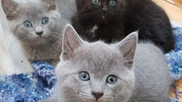 cat-13 [www.imagesplitter.net]_e