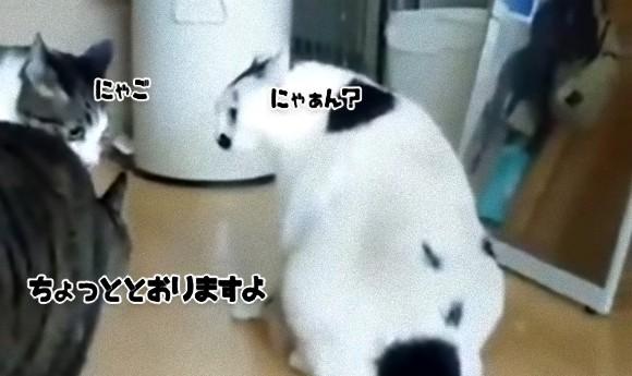 ね、簡単でしょ? 猫の猫による猫の喧嘩を仲裁する方法