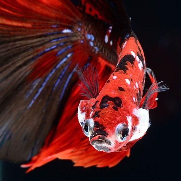fish-8_e