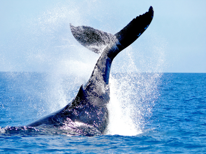 クジラの尻尾が大手柄。脱線列車を見事キャッチ