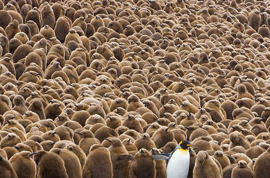 penguins_09