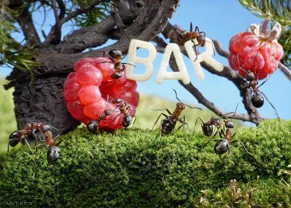 ants_01