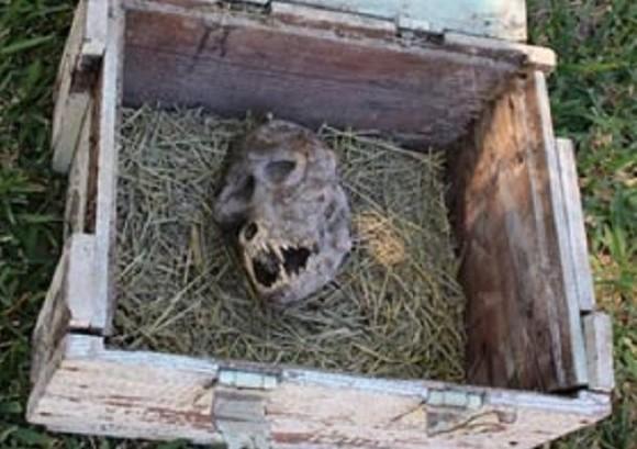 木箱に封じ込められし狼男?ファンタジー設定な頭蓋骨を農夫が発見して騒ぎに(マケドニア共和国)